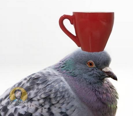 Καφές στο περιστέρι