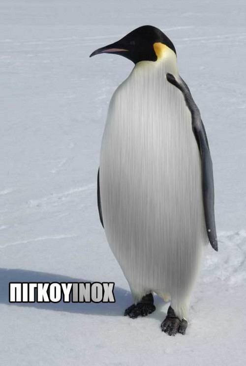 Πιγκουinox