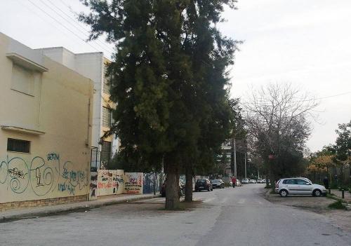 Τα δέντρα στο δρόμο