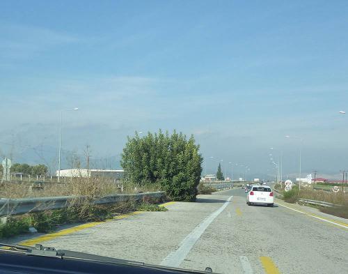 Ο θάμνος στον δρόμο