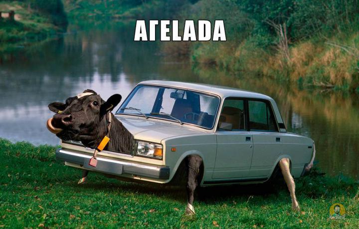 Η αγεLADA