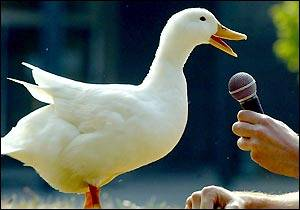 duck with microphone